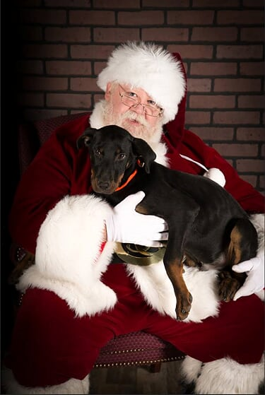 Hire Pet-Friendly Santas with real beards