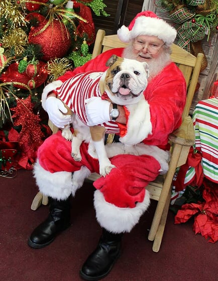 Pet Friendly Santas with real beards